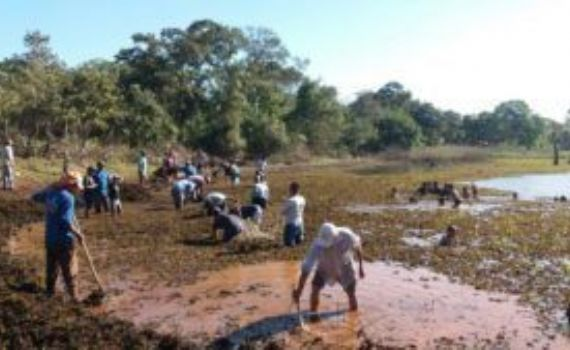Comunidade da aldeia Cachoeirinha se une para salvar açude