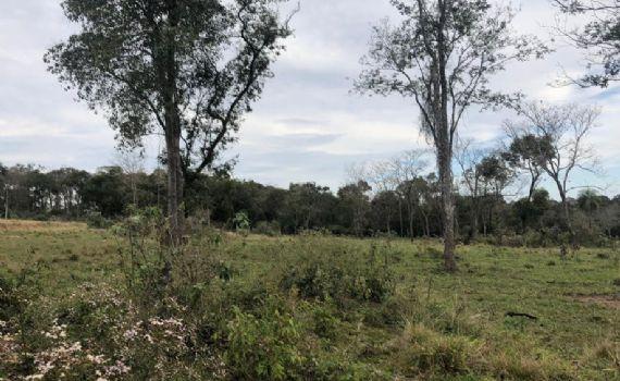 Polícia flagra desmatamento em área rural e homem é multado