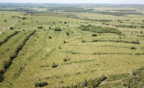 Pecuarista é multado em R$ 73 mil por desmatamento ilegal em Alcinópolis