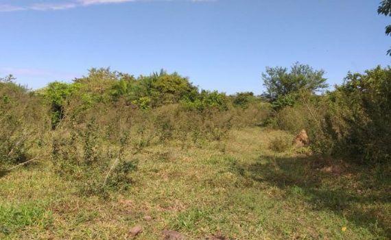 Pecuarista é multado em R$ 10 mil por desmatamento de matas ciliares