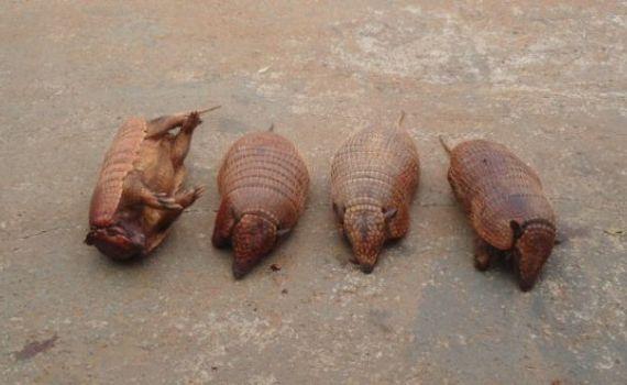Cinco caçadores são autuados em R$ 10 mil por crime ambiental