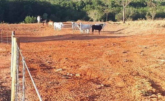 PMA autua infrator por criar gado em propriedade protegida