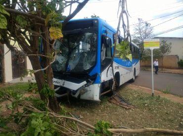 Sem freios, ônibus com passageiros só para após bater em árvore