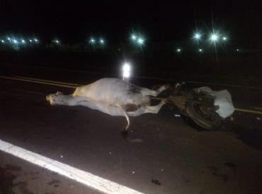 Motociclista morre após bater em vaca que invadiu pista
