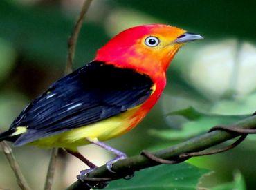 Parques da Capital são opções do Big Day, o 'grande dia' de observar pássaros