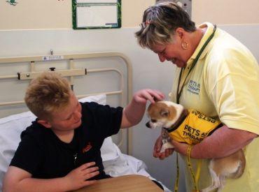 Entra em vigor lei que autoriza entrada de animais domésticos em hospitais de MS