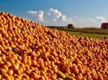 Importação de soja pela China em agosto dispara quase 10%